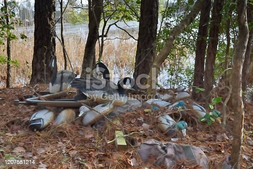 A collection of decoys used by local folks for duck and waterfowl hunting left along a shoreline until next fall when the season opens again