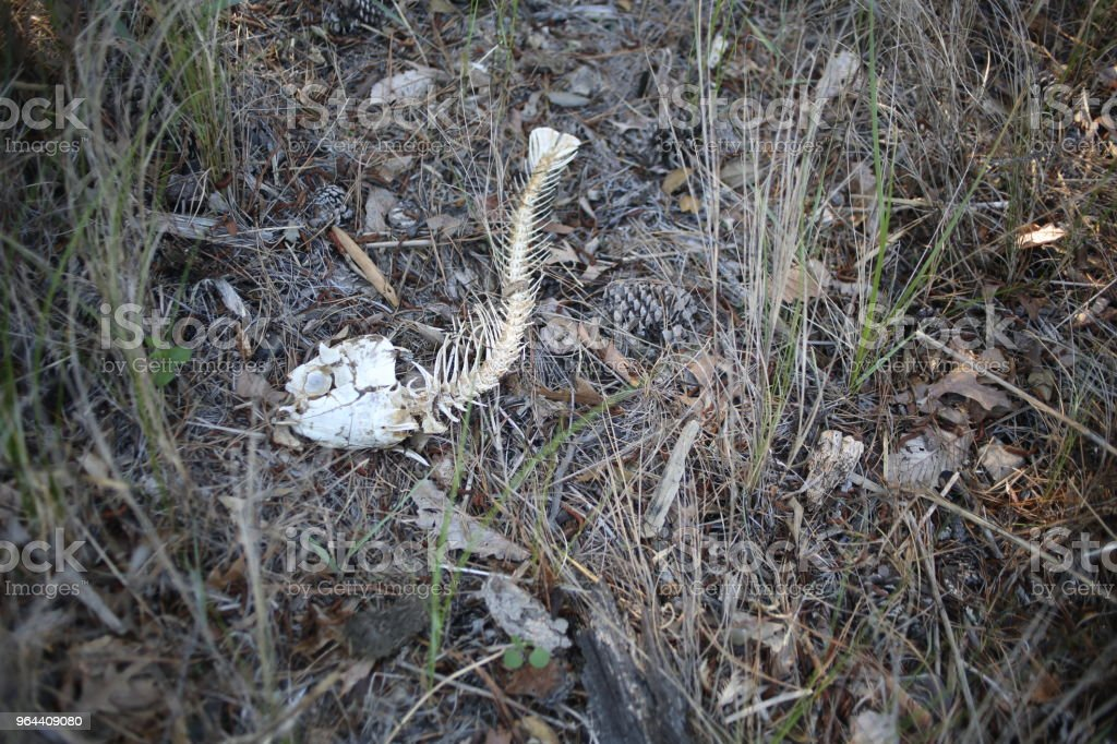 Ossos de peixe morto, deitado na areia e grama - Foto de stock de Animal royalty-free