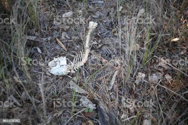 Foto de Ossos De Peixe Morto Deitado Na Areia E Grama e mais fotos de stock de Animal