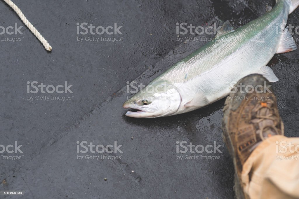Dead fish laying in boat stock photo