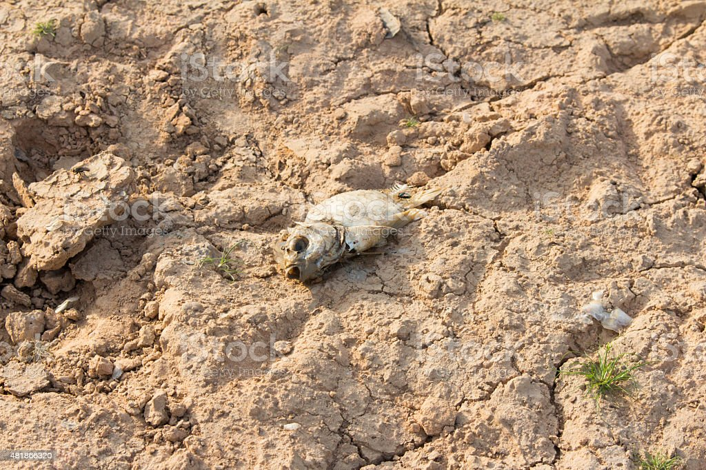 Dead fish on drought land stock photo