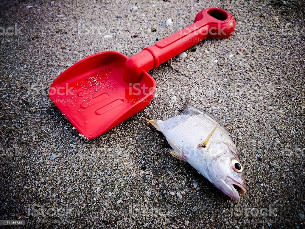 Dead fish on the beach. Water pollution concept stock photo