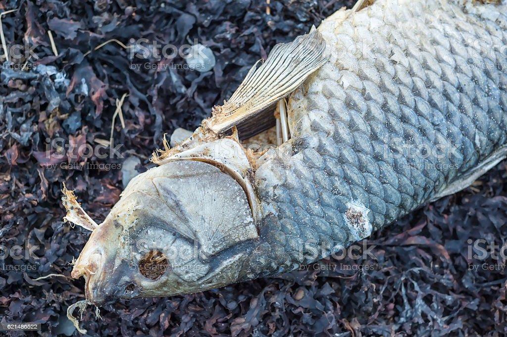 Dead fish on the shore of a river Lizenzfreies stock-foto