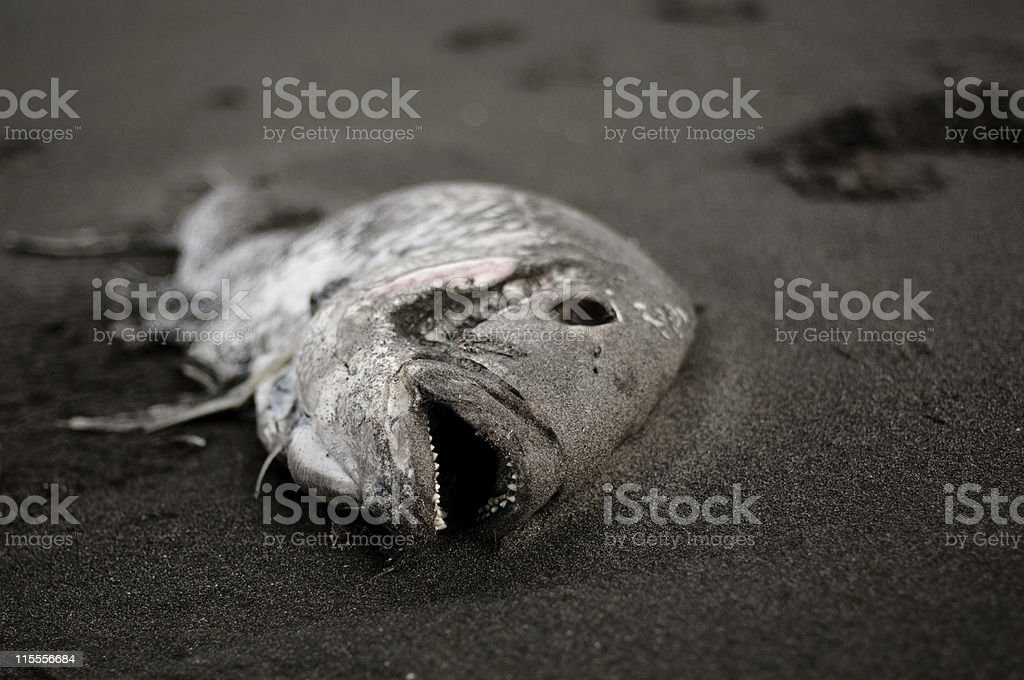 Dead fish royalty-free stock photo