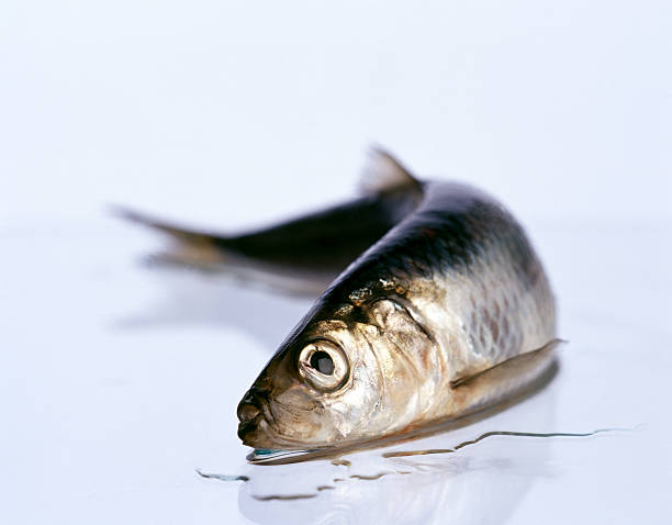 dead fish - herring stock photos and pictures