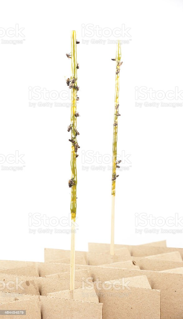 Dead flies on a sticky tape for catching insects royalty-free stock photo