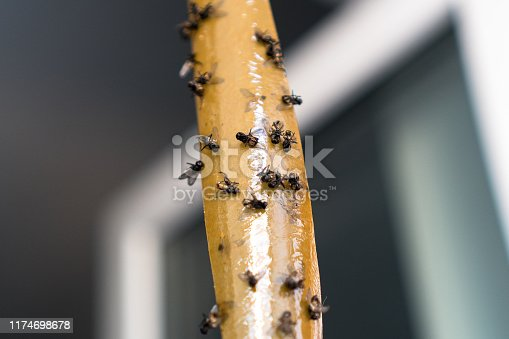 istock Dead Flies On Sticky Tape. Flypaper, sticky tape. Trap for flies, insects.Flies stuckTrap for insects insects. lot flies stuck to the yellow sticky tape 1174698678