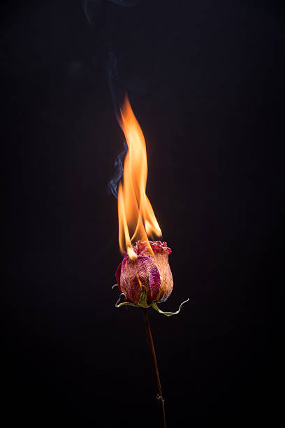 c15b8e72299 Best Burning Flower Stock Photos, Pictures & Royalty-Free Images ...