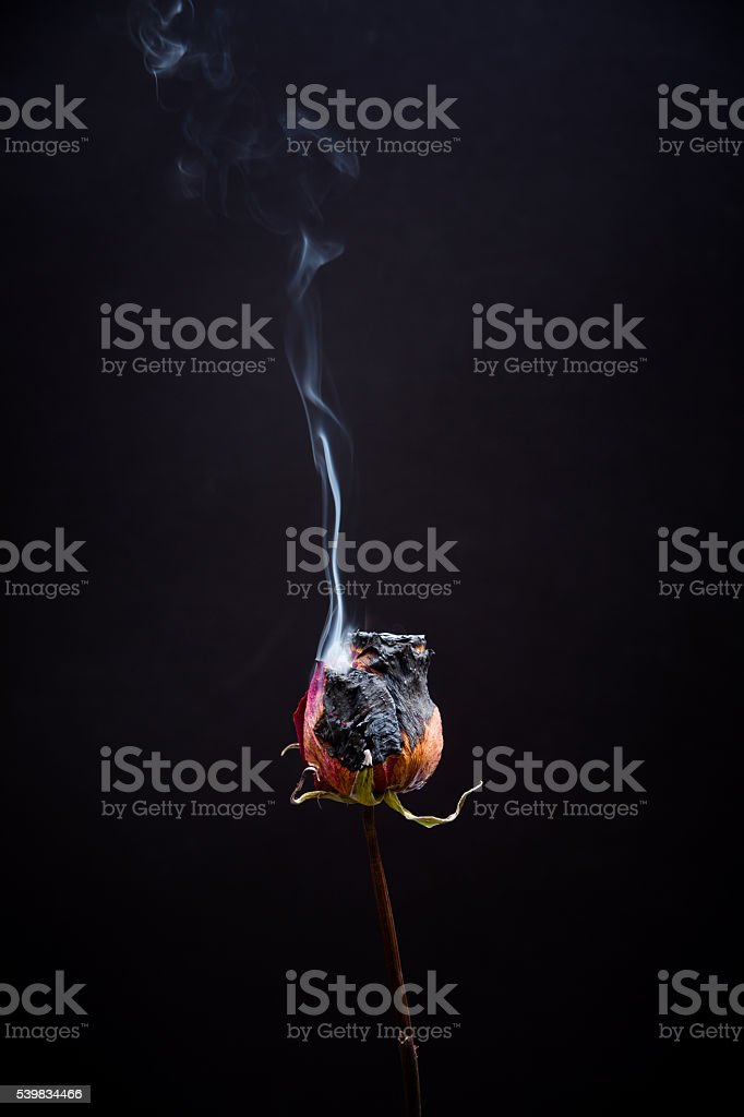 Dead Flowers Burning stock photo