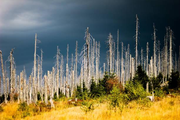döda skogen - art bildbanksfoton och bilder