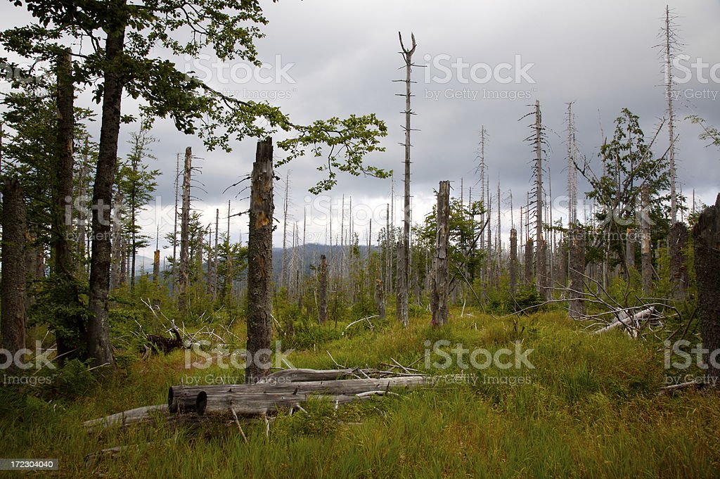 Dead Forest stock photo