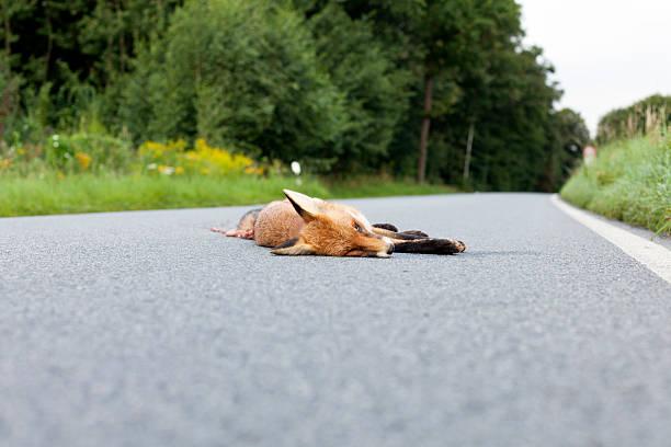Dead Fox – Foto