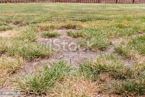 istock Dead grass, bare spots, and cracks in soil of lawn due to no rain and hot weather causing drought conditions 1164186113