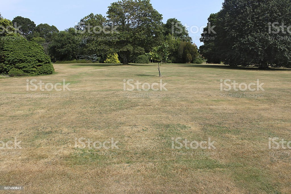 Dead grass on brown lawn, drought, hot dry summer weather stock photo