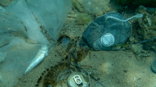 Dead Greater weever fish (Trachinus draco) hitting trapped in plastic bag lies inside plastic bag on the seabed among the medical face mask, plastic and other garbage. Plastic pollution of Ocean. stock photo