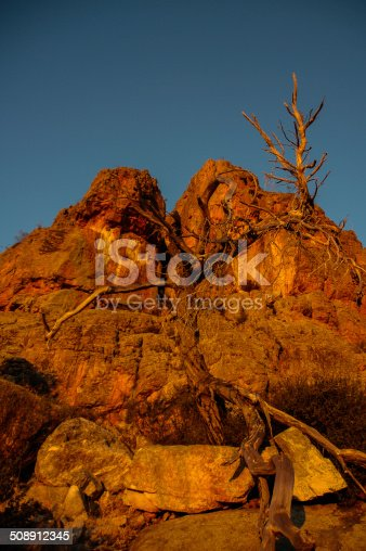 a close up of a dead gumtree located at Mt Arapiles in regional Victoria, Australia at sunrise with the red of the rock intensified with the rising sun.