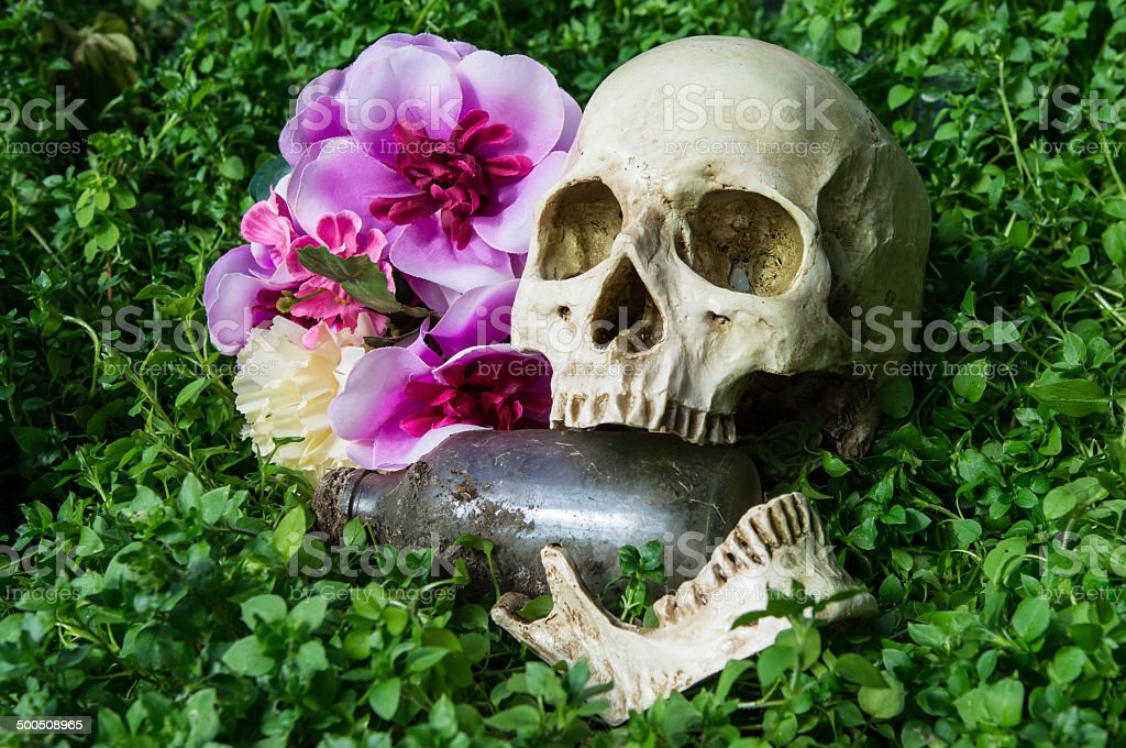 dead human skull in cemetery stock photo