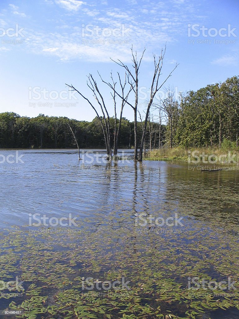 Dead in the Water royalty-free stock photo