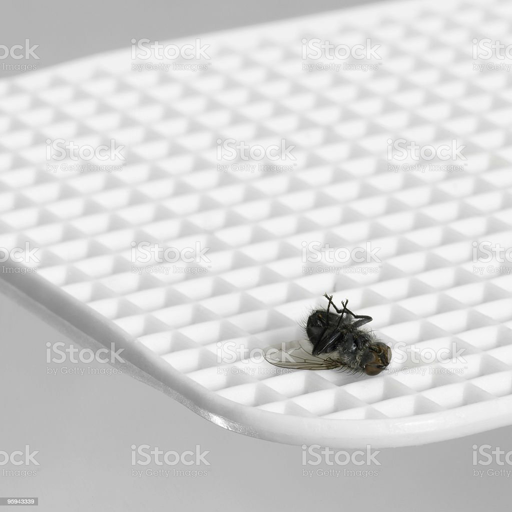 dead insect on fly flap stock photo