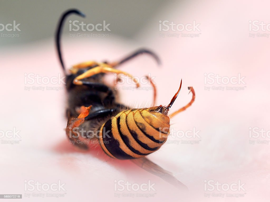 Dead insect wasp on a man's hand - foto de stock