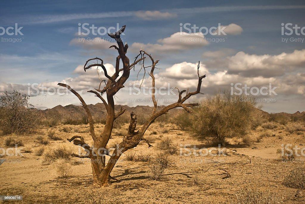 Dead Ironwood Tree royalty-free stock photo