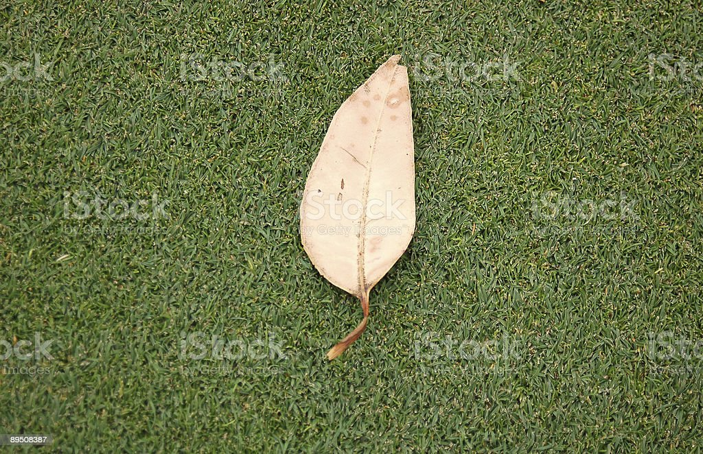 Dead leaf on green royalty-free stock photo