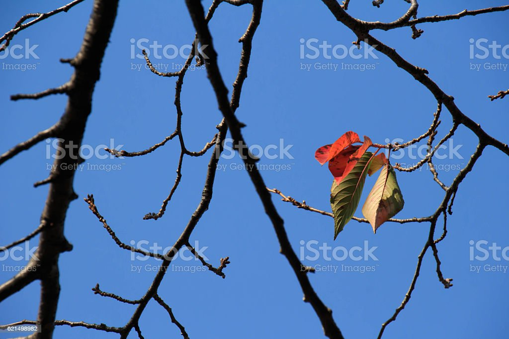 Dead leaves and sky foto stock royalty-free