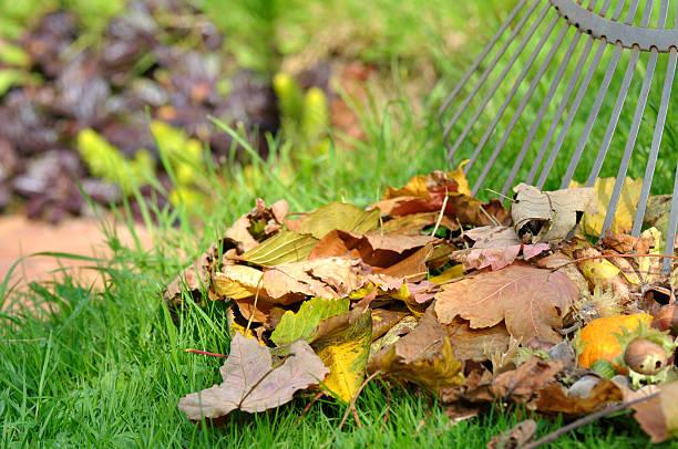 Muertos de las hojas en el jardín - foto de stock