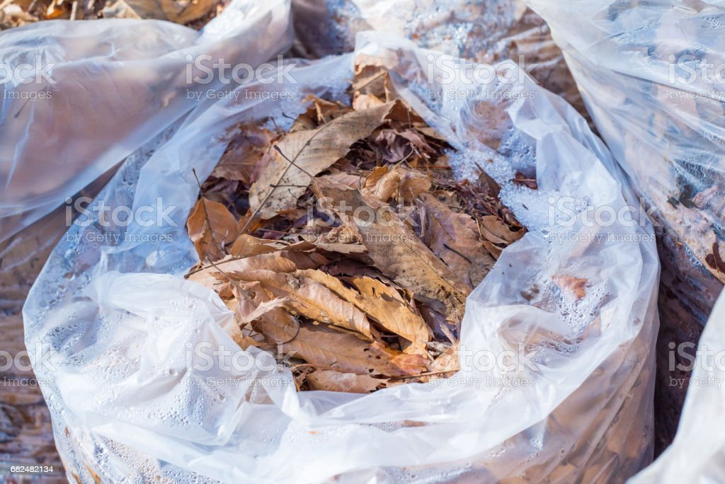 Dead leaves in the garbege bag royalty-free stock photo