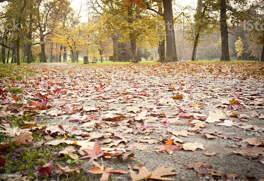 Dead Leaves In The Park royalty-free stock photo