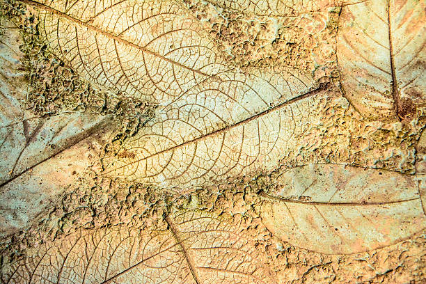 Dead leaves Dead leaves on the ground fossil leaf stock pictures, royalty-free photos & images