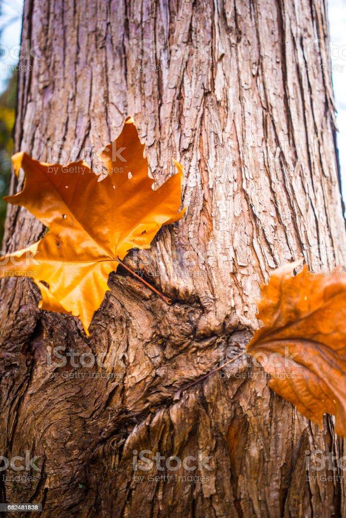 Tote Blätter Lizenzfreies stock-foto