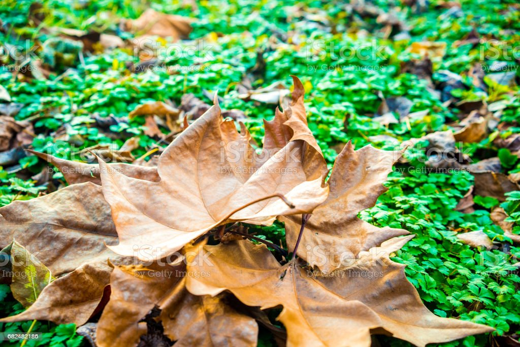 Dead leaves royalty-free stock photo