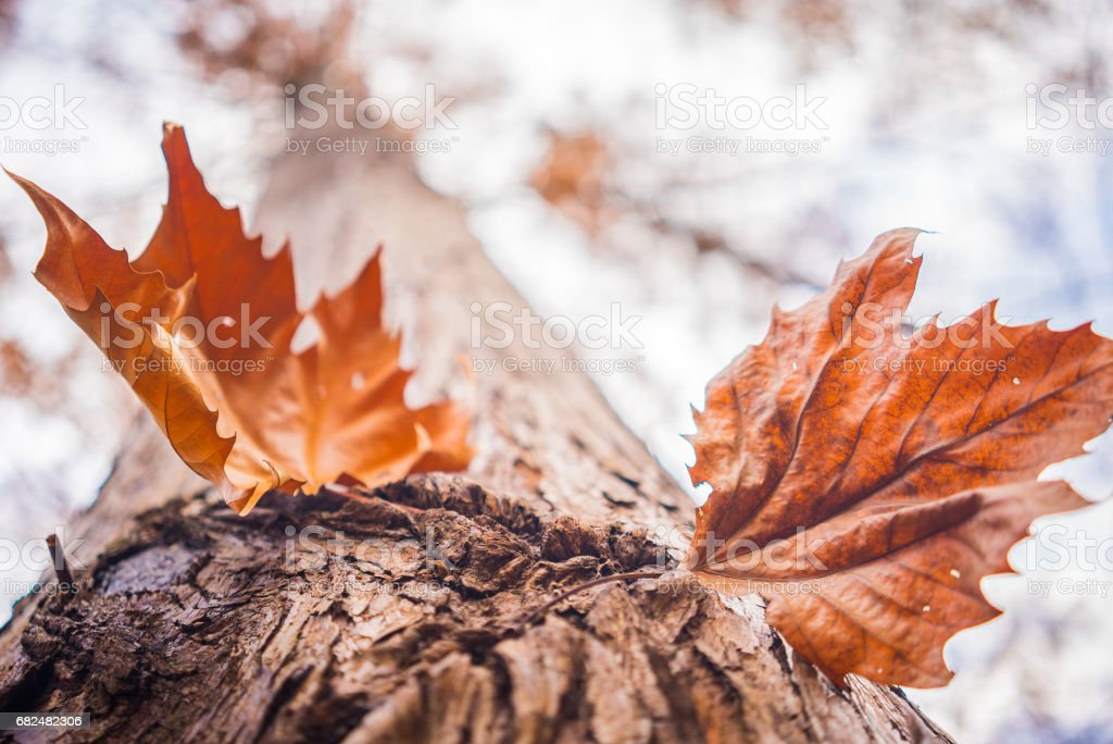 Dead leaves foto stock royalty-free