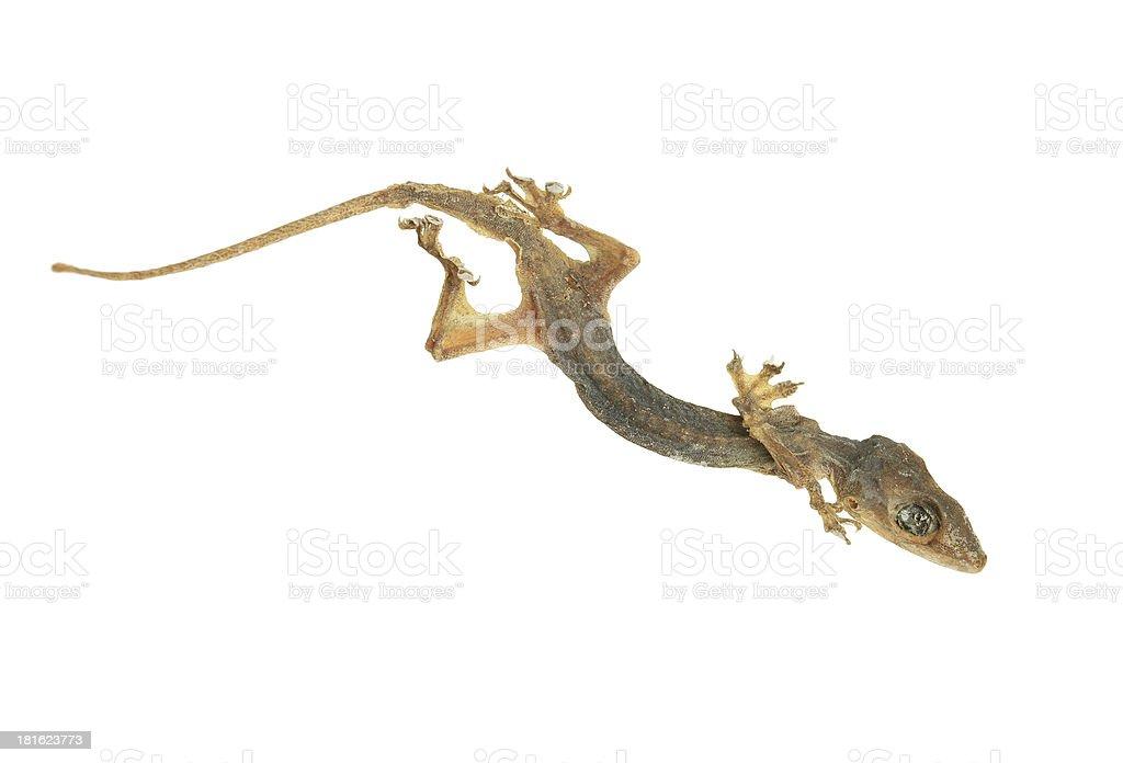 Dead lizard royalty-free stock photo