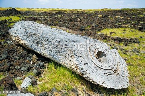 Dead Log in Big Hawaii Island