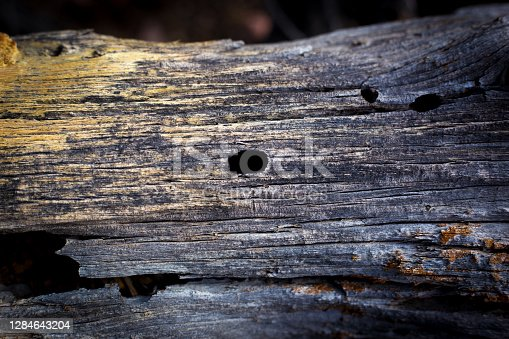 Dead Log with Yellow Fungus Close-Up