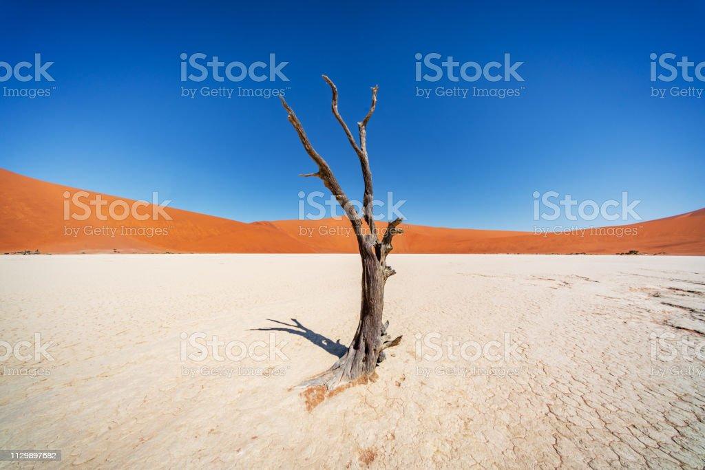 Dead Lonely Tree Dead Vlei Sossusvlei Namib Desert Namibia stock photo