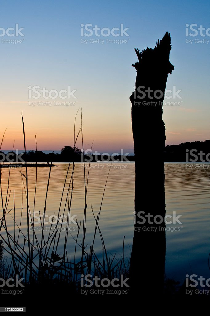 dead marsh tree royalty-free stock photo