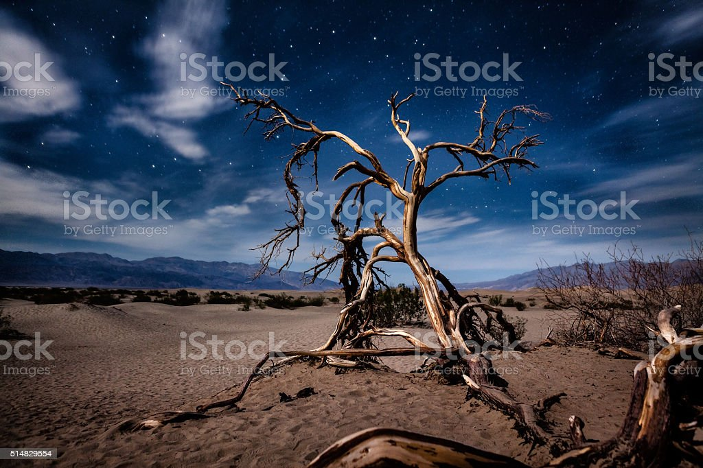 Dead Mesquite Tree At Night, Mesquite Flat Dunes, Death Valley stock photo