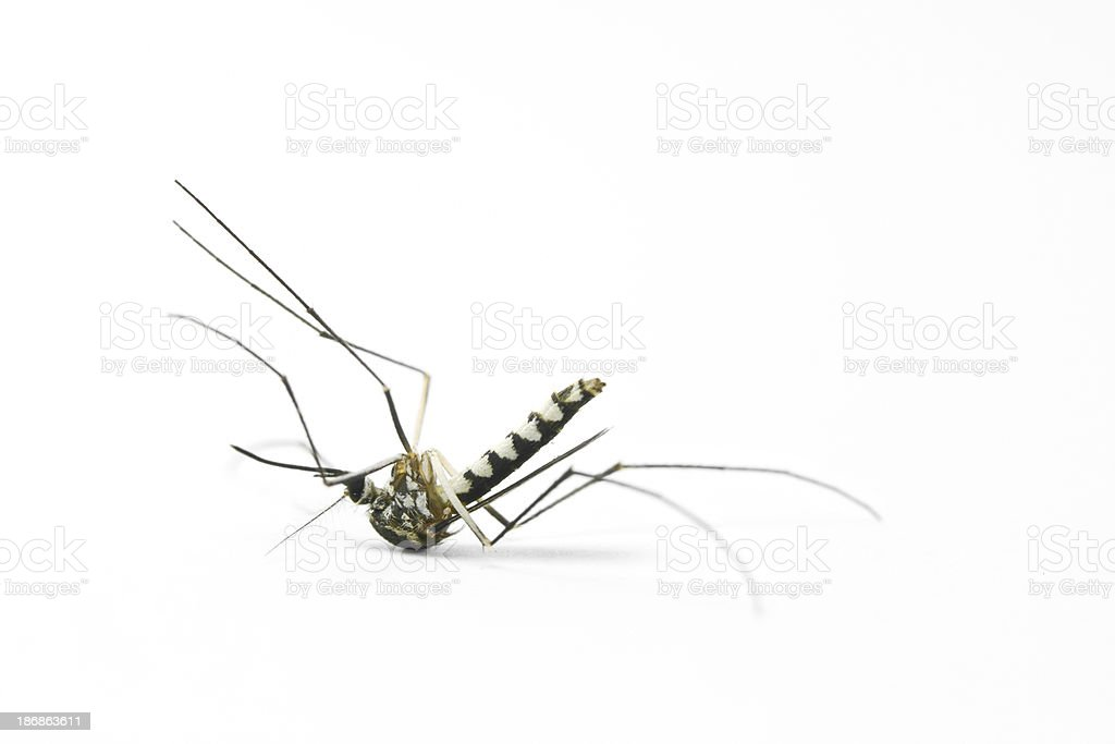 Dead mosquito - Royalty-free Animal Stock Photo