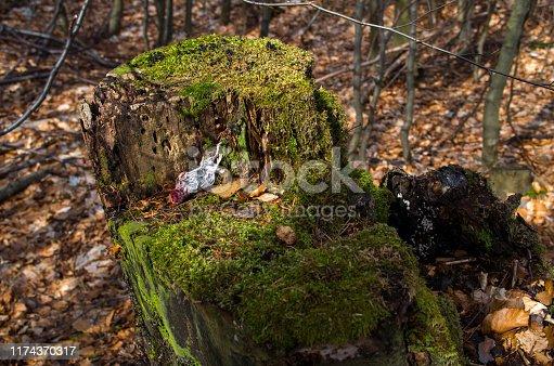 495695633 istock photo Dead mouse on a tree stump. 1174370317