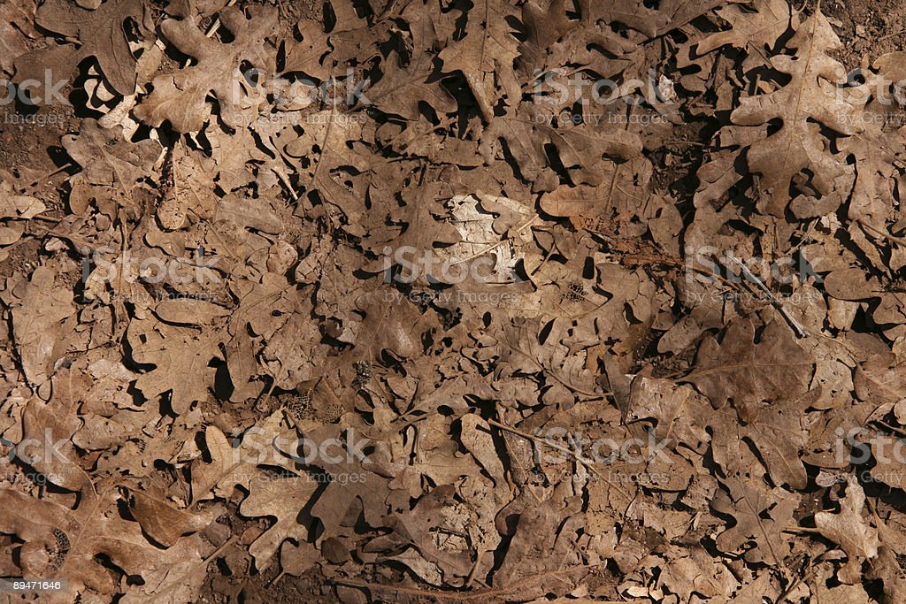 Dead Oak Leaf Background royalty-free stock photo