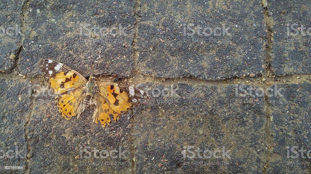 Morto-de-laranja no pavimento - foto de acervo