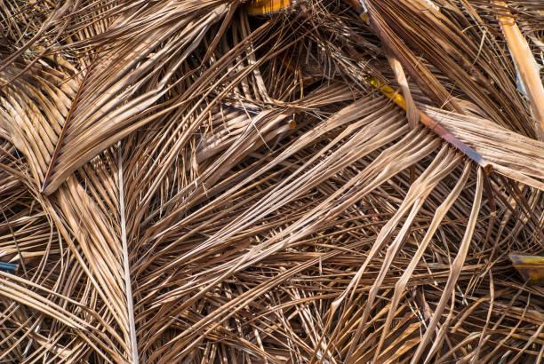 dead palm foliage background - die toteninsel stock-fotos und bilder
