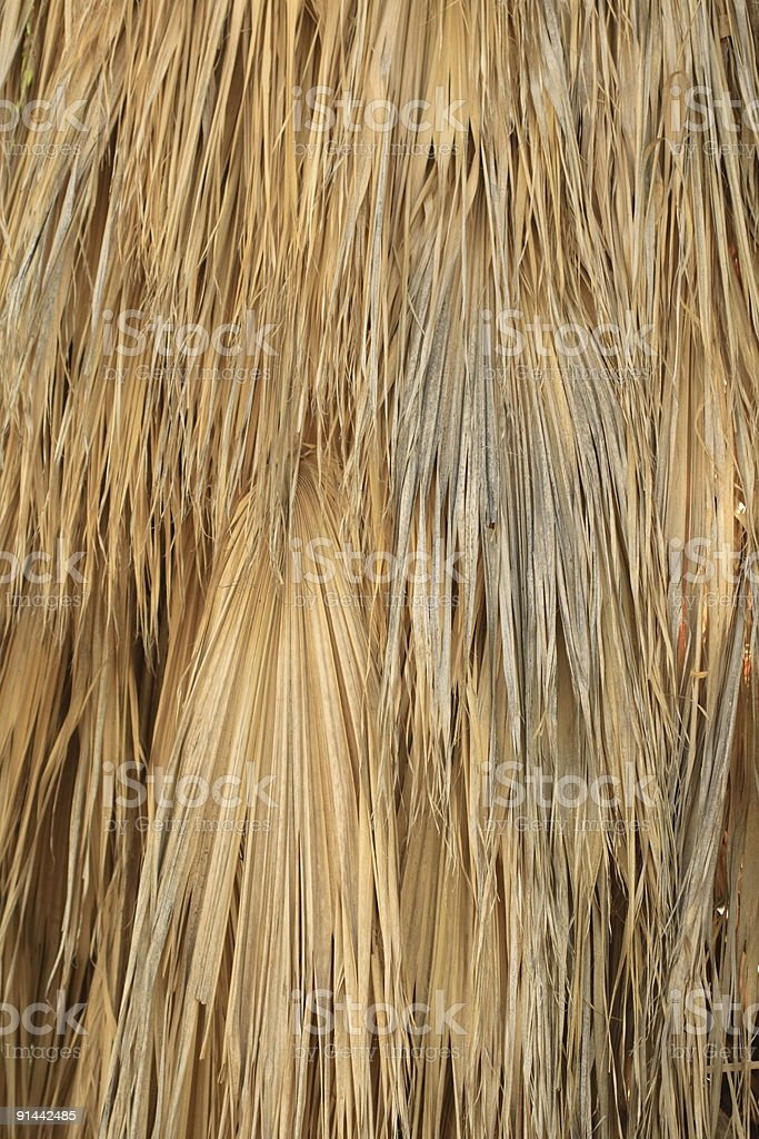 Dead Palm Fronds stock photo