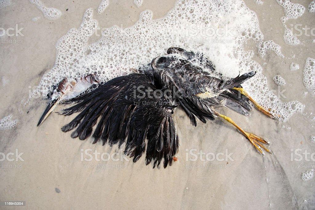 Dead Pelican royalty-free stock photo