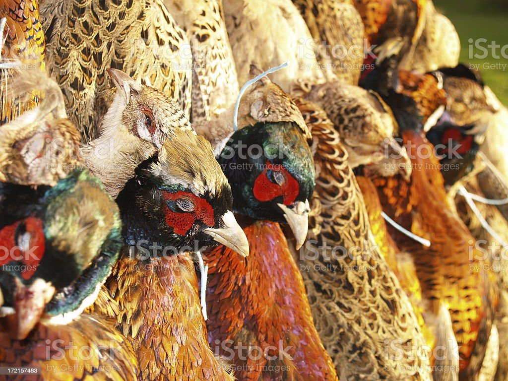 Dead Pheasants 2 royalty-free stock photo