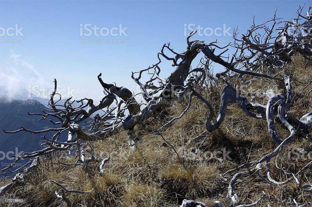 Dead Pine of Syue Shan (Taiwan Central Mountain Range) stock photo