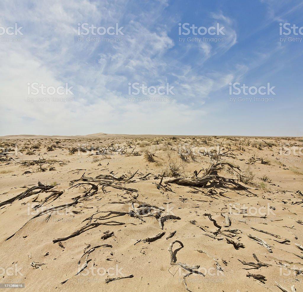dead plant in Badain Jaran Desert stock photo